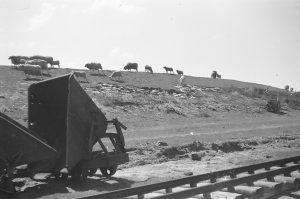 Deichausbesserung 1962